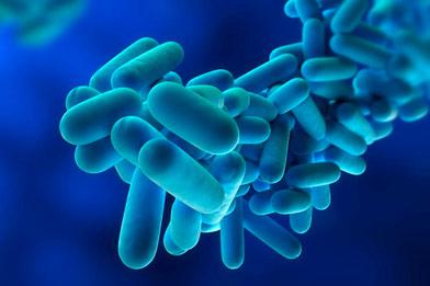 Tratamientos y control Legionella